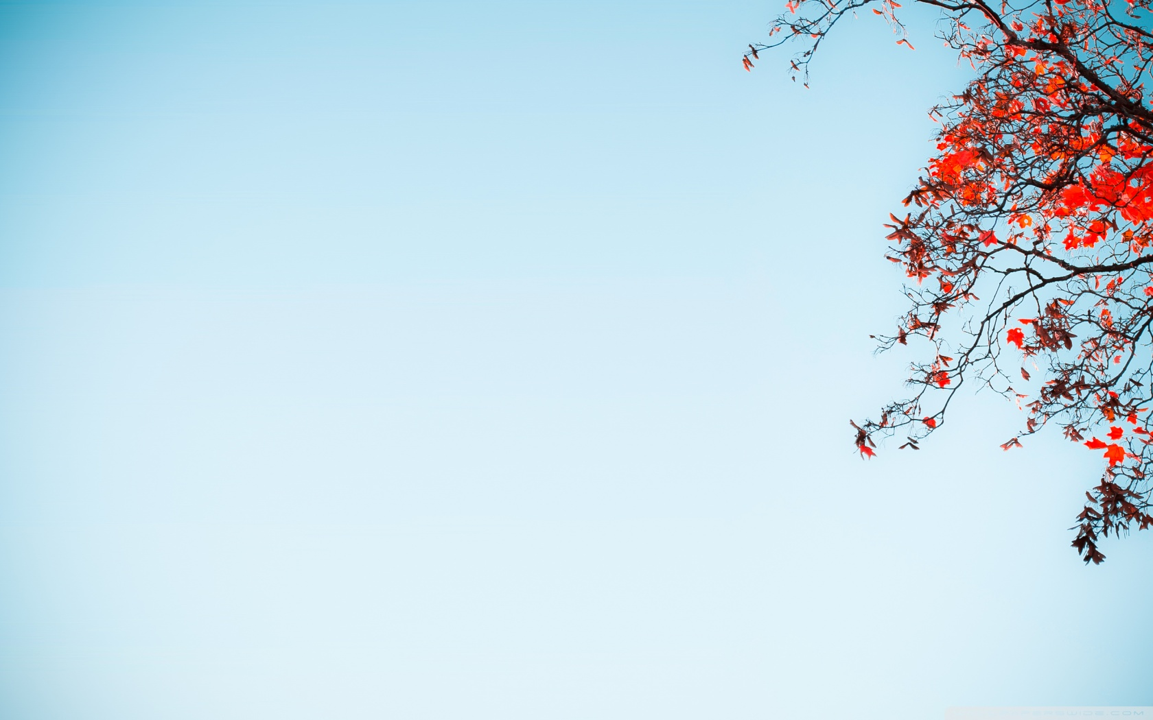 red_tree_against_a_blue_sky-wallpaper-1680×1050